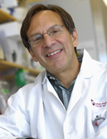 Dana-Farber researcher Bruce Spiegelman, PhD, in his lab.