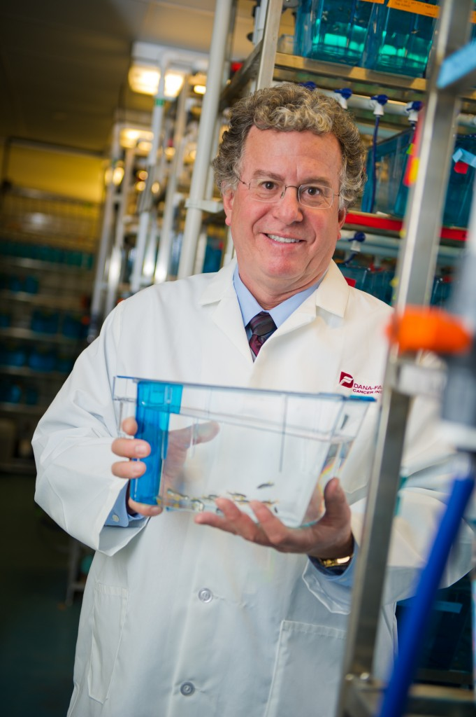 Thomas Look , MD, uses translucent zebrafish to study the way cancer behaves.