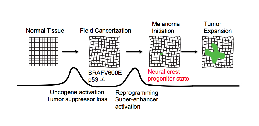 Field-cancerization