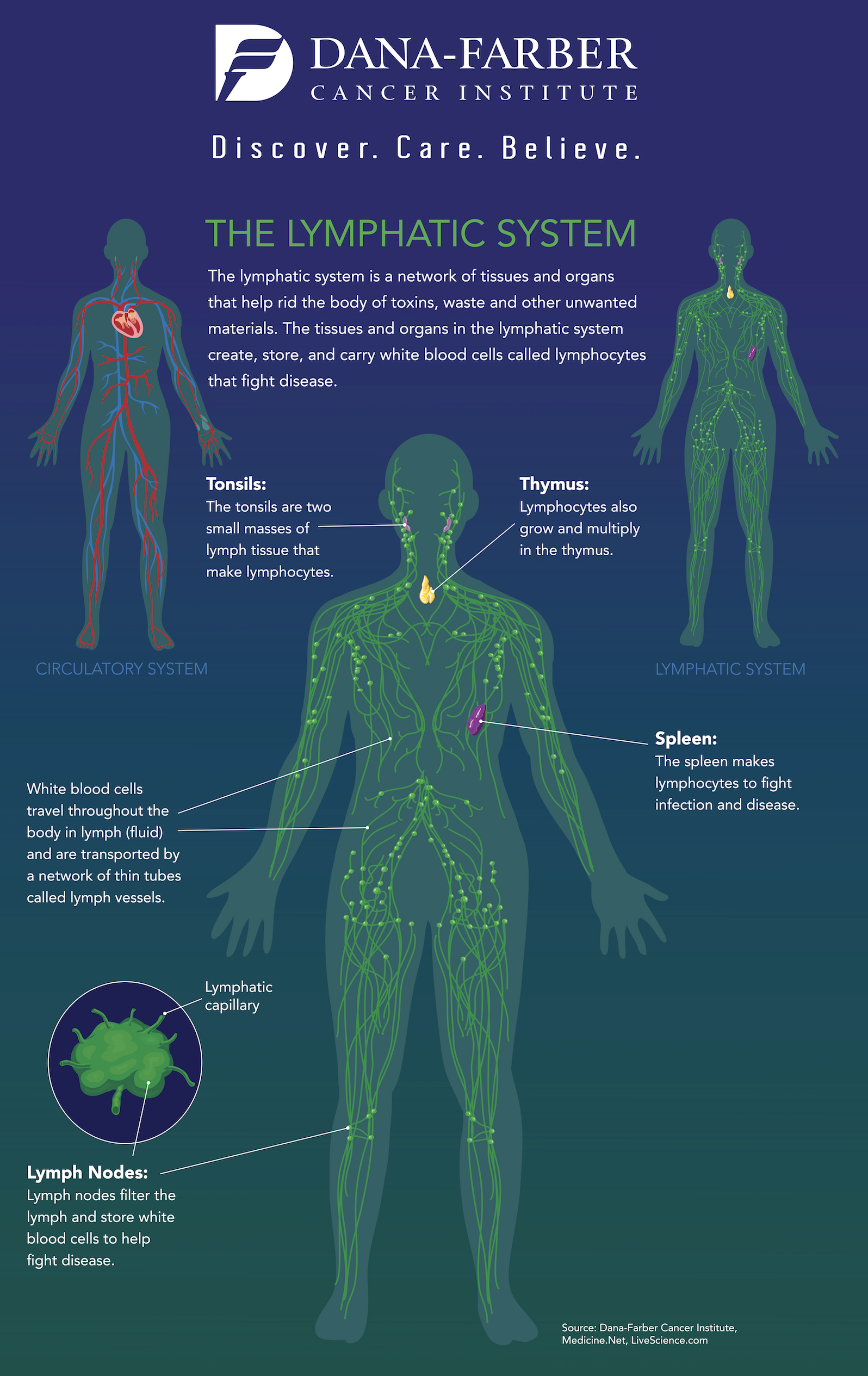 7367-lymphatic-system-infographic