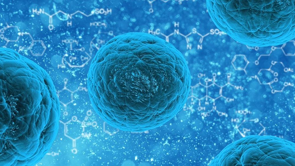 Stem cells.