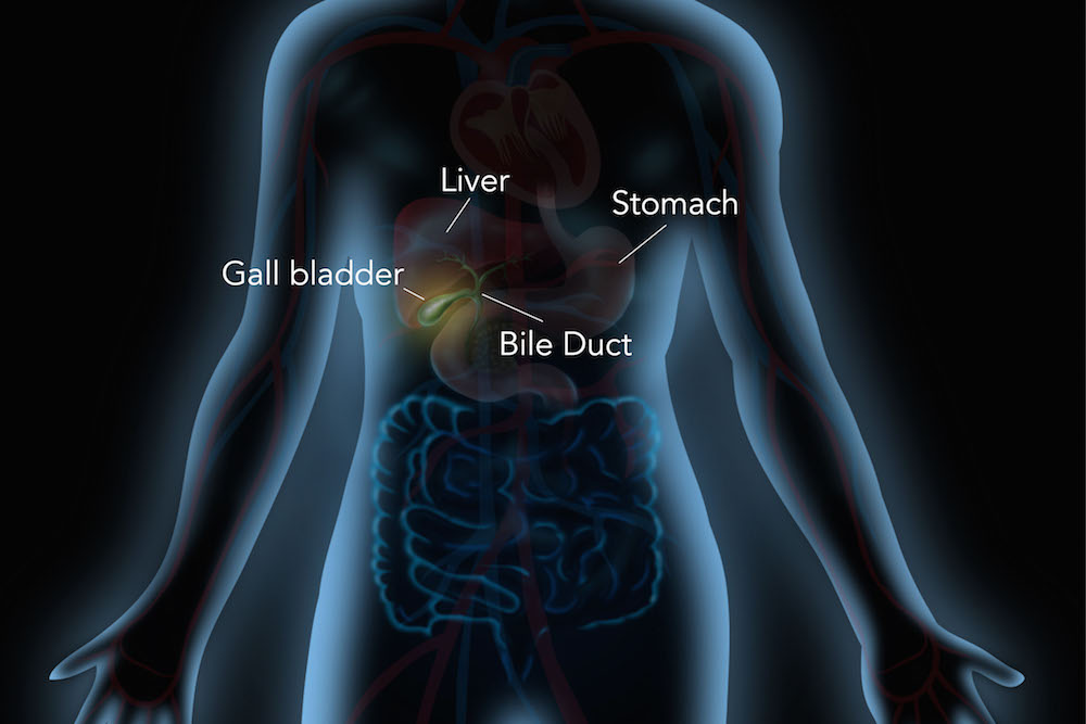 What Does The Gallbladder Do Dana Farber Cancer Institute