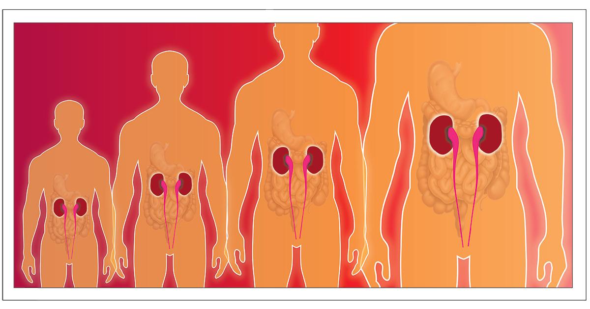 Kidney-Illustration_facebook[2]