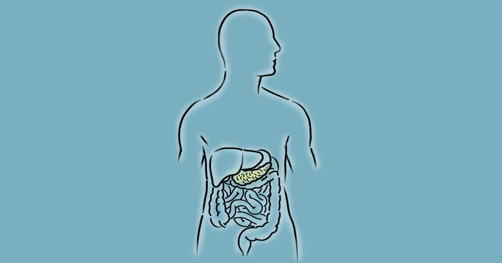 An illustration of the pancreas.