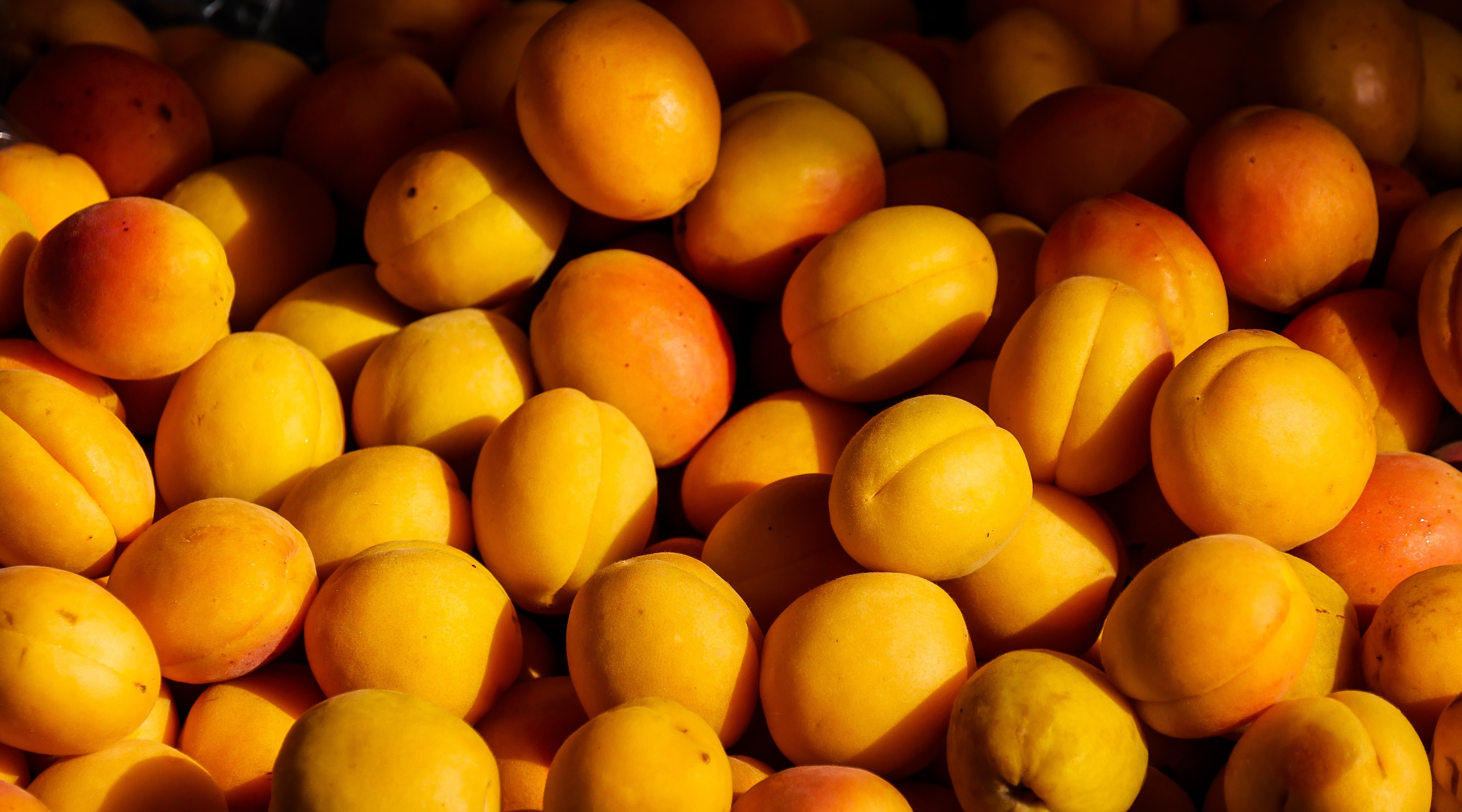 Apricot Seeds and Cancer: Debunking the Myth | Dana-Farber