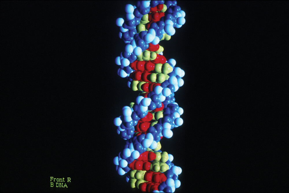 A model of DNA.
