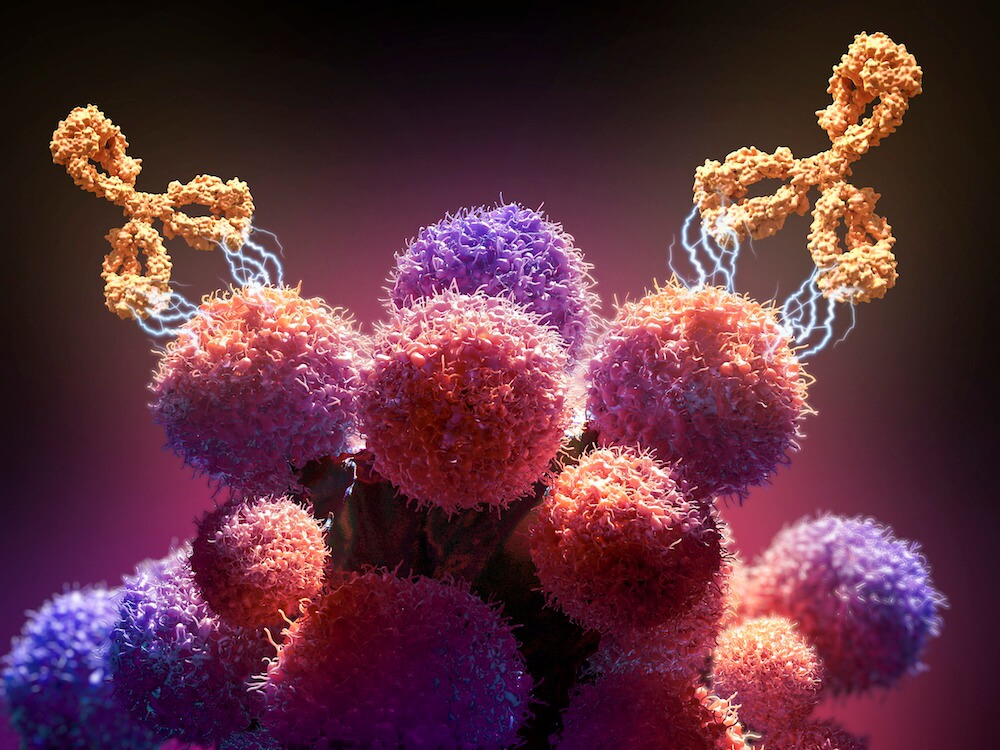 An illustration of a monoclonal antibody drug (orange) attacking cancer cells (round).